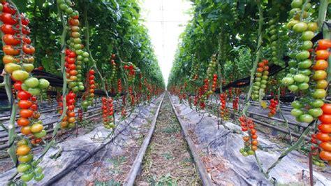 how to design a landscape how to design a vegetable garden modern garden