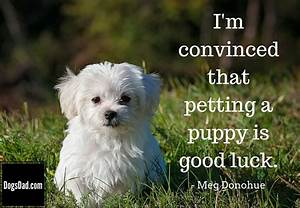 Puppy Quotes Sayings | www.pixshark.com - Images Galleries ...