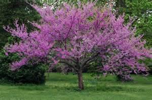 great flowering trees merrifield garden center