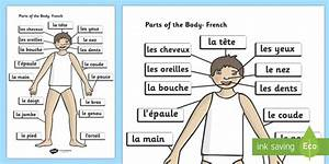 Parts Of The Body A4 French Labelled Reference Sheet