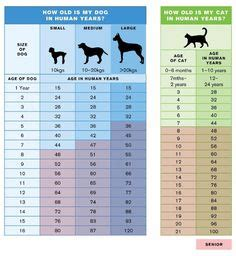 dogs age  human years  conversion chart pets