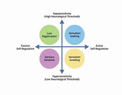 Sensory Processing Patterns Four Registration Seeking Low