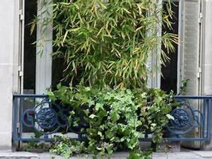Bambou En Pot Pour Terrasse : bambou conseils d 39 achat bien acheter ~ Louise-bijoux.com Idées de Décoration