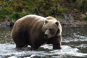 Mrs. Yollis' Classroom Blog: Mr. Yollis Shares About ...  Grizzly