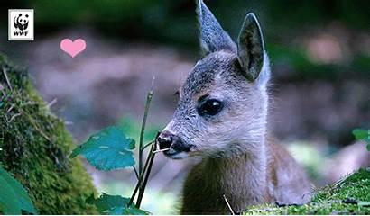 Valentine Ecard Wwf Wildlife Send Main Required