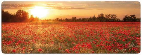 Glasbild, Home Affaire, »mohnfeld Im Sonnenuntergang