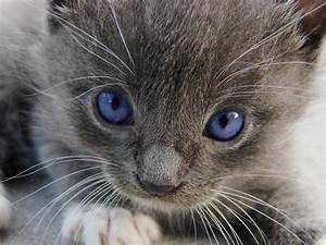 Grey Kitten | Even though my cute little kitten has never ...