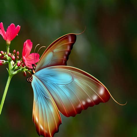 close  silky butterfly    wallpapers