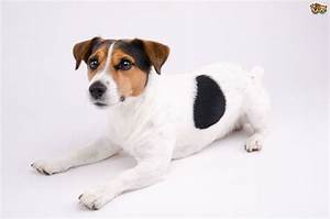 some important and yet monly overlooked aspects of small dog care