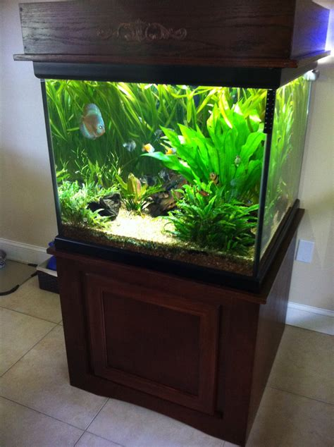 gallon cube tank tortoise forum