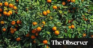 Orange Tree Leaves For A Taste Of The Tropics