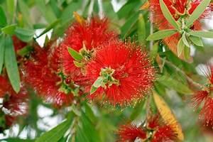 Baum Mit Blüten : bl hender baum mit roten bl ten stock foto colourbox ~ Frokenaadalensverden.com Haus und Dekorationen