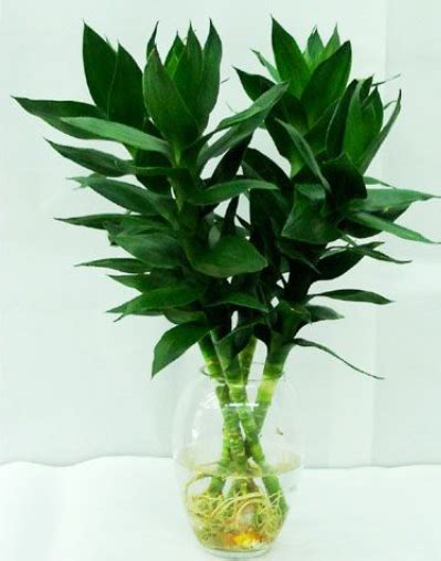 feng shui flower  plant taboos  tips  prosperity