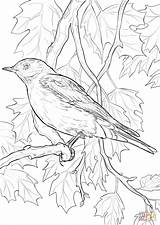 Coloring Bird Pages Bluebird Mountain State Nevada Idaho Drawing Printable Birds Flower Supercoloring Orange National Adult Sheet Sheets Draw Texas sketch template