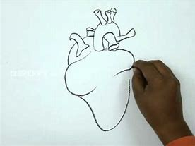 Images for easy way to draw heart diagram 1buyonlineshop0 hd wallpapers easy way to draw heart diagram ccuart Image collections