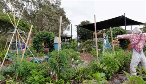 school kitchen garden grants meankitchen