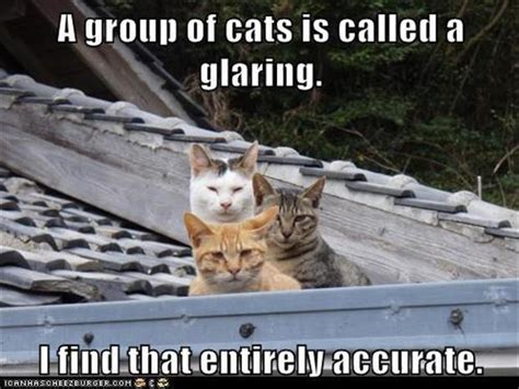 funny animal cats called tagged