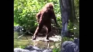 REAL BIGFOOT CAUGHT ON CAMERA 2015 (BIGFOOT PROOF/EVIDENCE ...