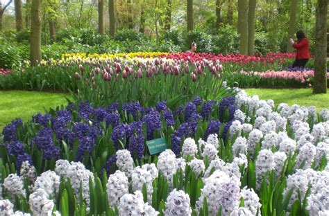 Keukenhofas: čia gyvena pavasaris | PasaulisKišenėje.lt