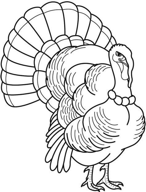 wild turkey   feathers overlap coloring pages