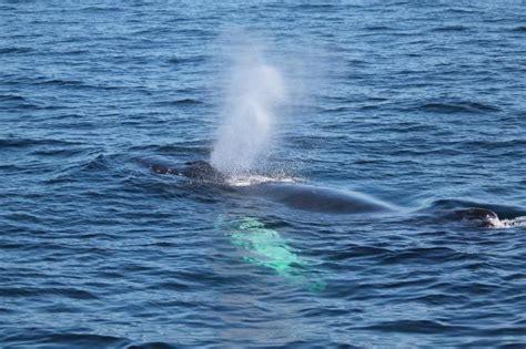 Je li kita riba ili sisavac? Vrste kitova. Što kitovi jedu ...