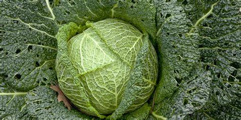 cook cabbage great british chefs
