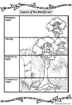 rainforest lesson activities  koala classroom tpt