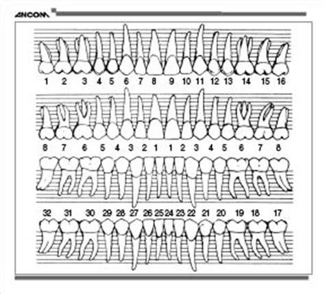Item# 50-0520 Periodontal Dental Chart Sticker