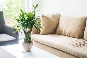 Pflanze Mit S : couchs mit einer pflanze in der mitte auf einem tisch download der kostenlosen fotos ~ Orissabook.com Haus und Dekorationen
