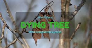 How To Save A Dying Tree With Guaranteed Success