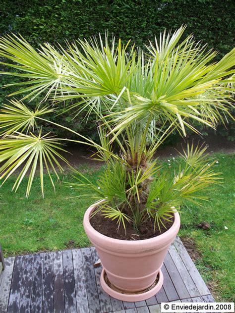 photos palmiers enviedejardin