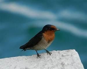 Bird - Animals - A-Z Animals