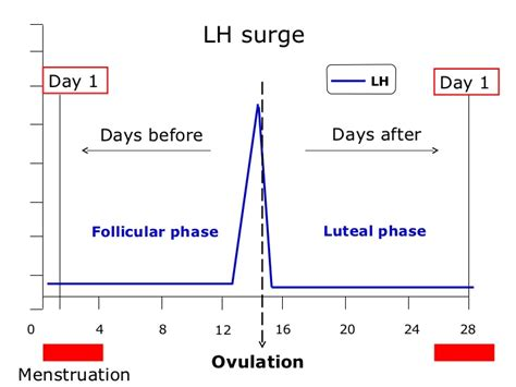 lh surge cycle menstrual before days