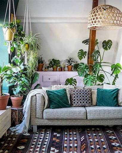 Living Plant Indoor Decorate Bohemian Plants Rooms
