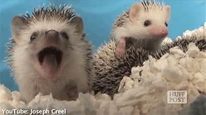 Yawning Animals Cutest Ever Blazepress