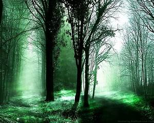 Desktop Wallpaper images Forest pathes HD wallpaper and ...
