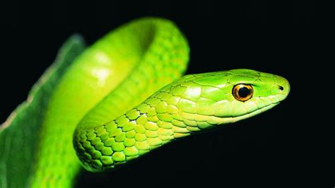 green snake beautiful snake wallpaper hd images one hd wallpaper pictures backgrounds free download