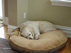 kirkland signature dog bed best between costco kirkland With costco large dog bed