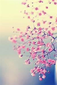 Pink flower#iphone wallpaper   Background   Wallpaper ...