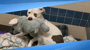 Sad Shelter Dog Just Learned He And His Elephant Are Going ...