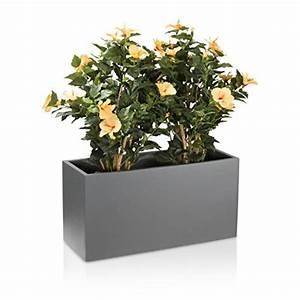 Piante Da Esterno In Vaso: Piante grasse da esterno adatte in vaso vivaio un