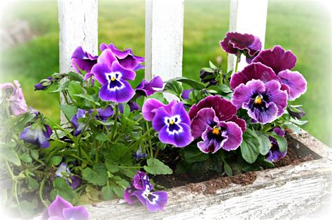 best potted flowers planting potted flowers iimajackrussell garages best potted flowers ideas