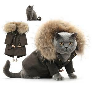 cat clothing 10 best winter for your cat pets world