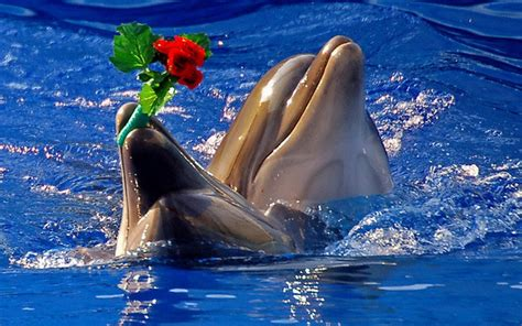 Cool Baby Animal Wallpapers Cute Dolphin Wallpaper