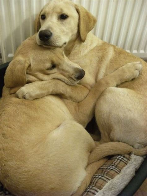 dogs hugging - Daily Picks and Flicks