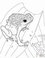 Frog Dart Poison Coloring Pages Drawing Frogs Printable Dot Getdrawings sketch template