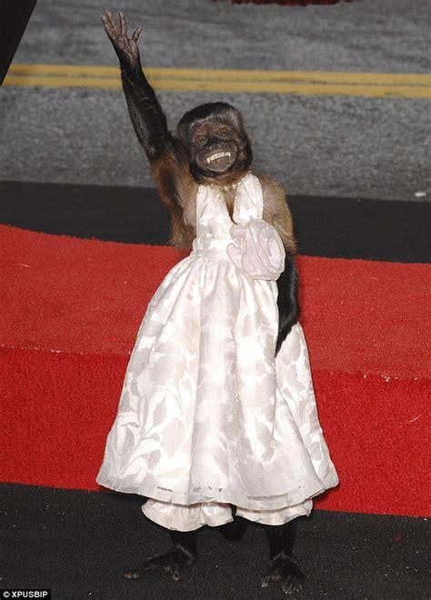 crystal  monkey night   museum wiki fandom powered  wikia