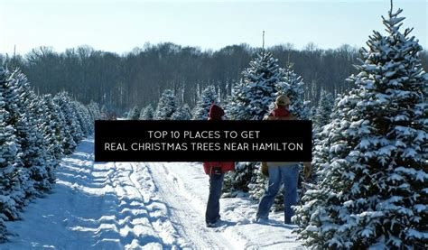 best place to cut your own christmas tree in va top 10 places near hamilton to get a real tree momstown hamilton