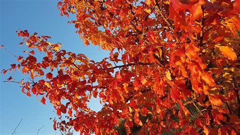 ilmaisia kuvia taivas syksy syksyn lehdet punaiset