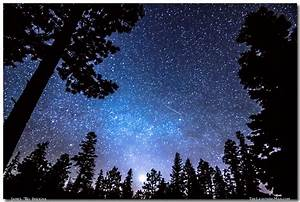 Forest Star Gazing An Astronomy Delight   Striking ...